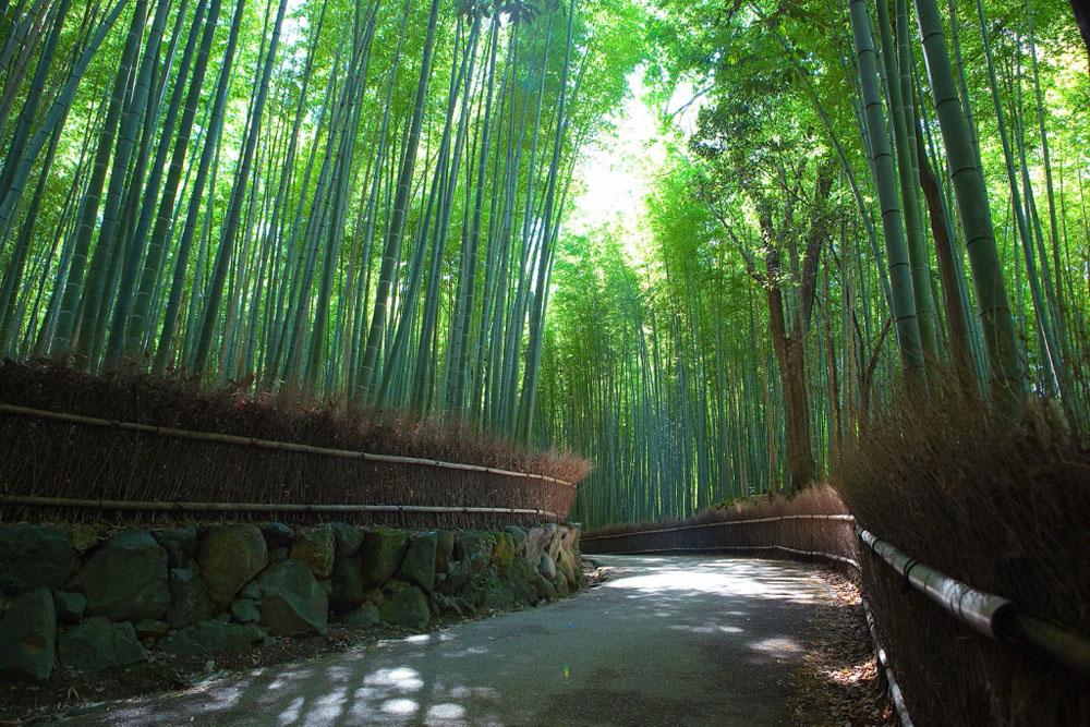 Бамбуковый коридор у подножья горы в Киото 683