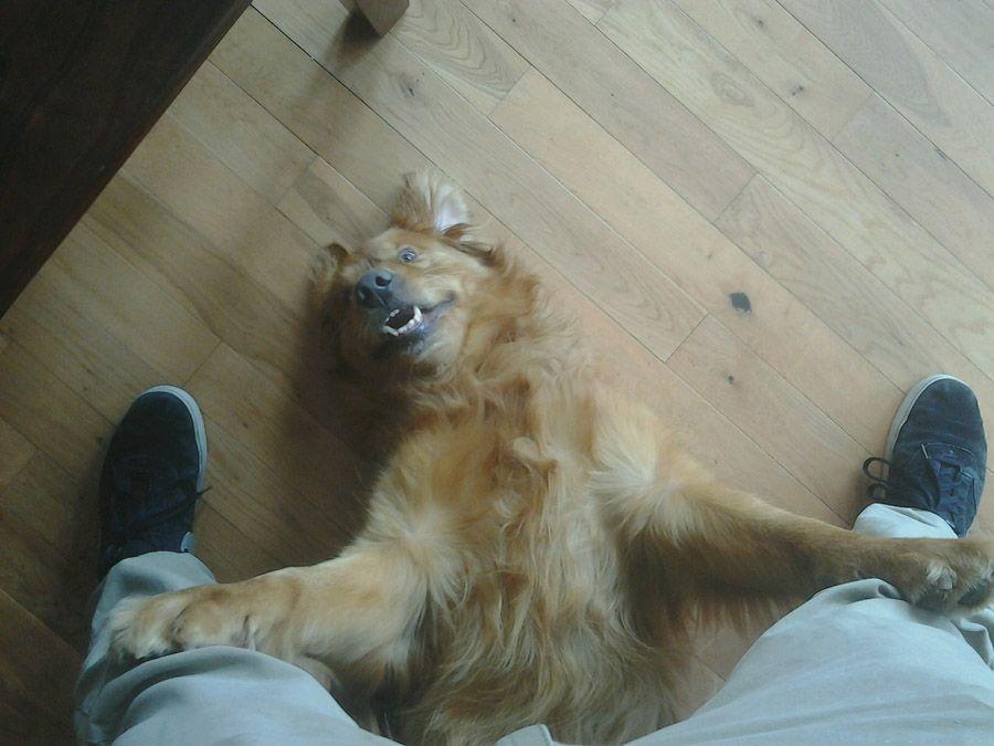 howtodog03 Собака, ты все перепутала...