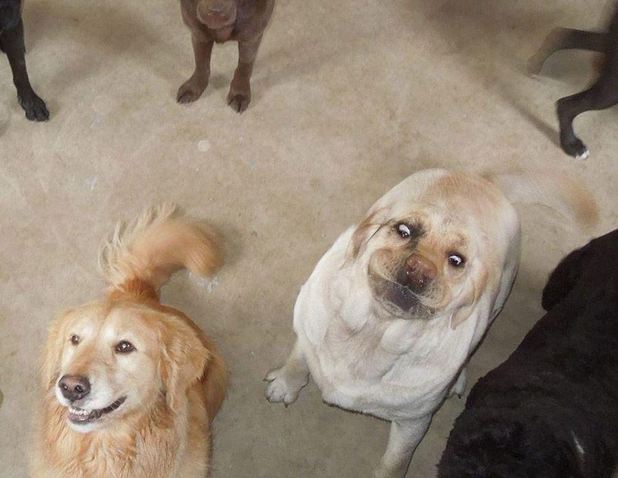 howtodog10 Собака, ты все перепутала...