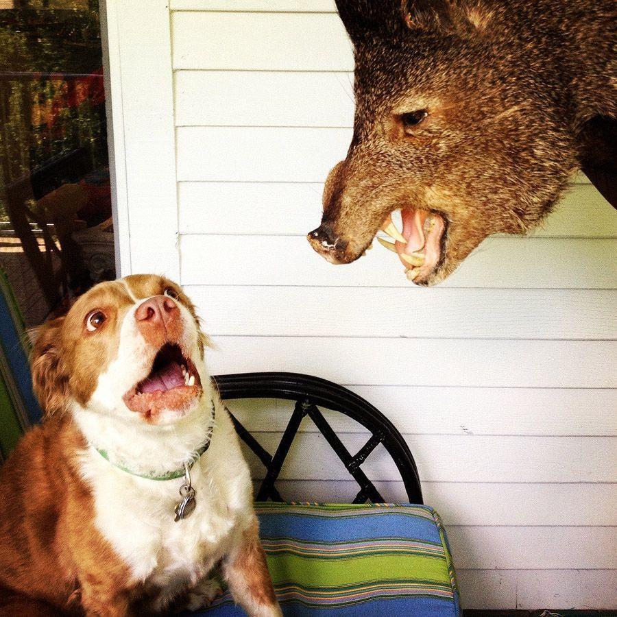 howtodog12 Собака, ты все перепутала...