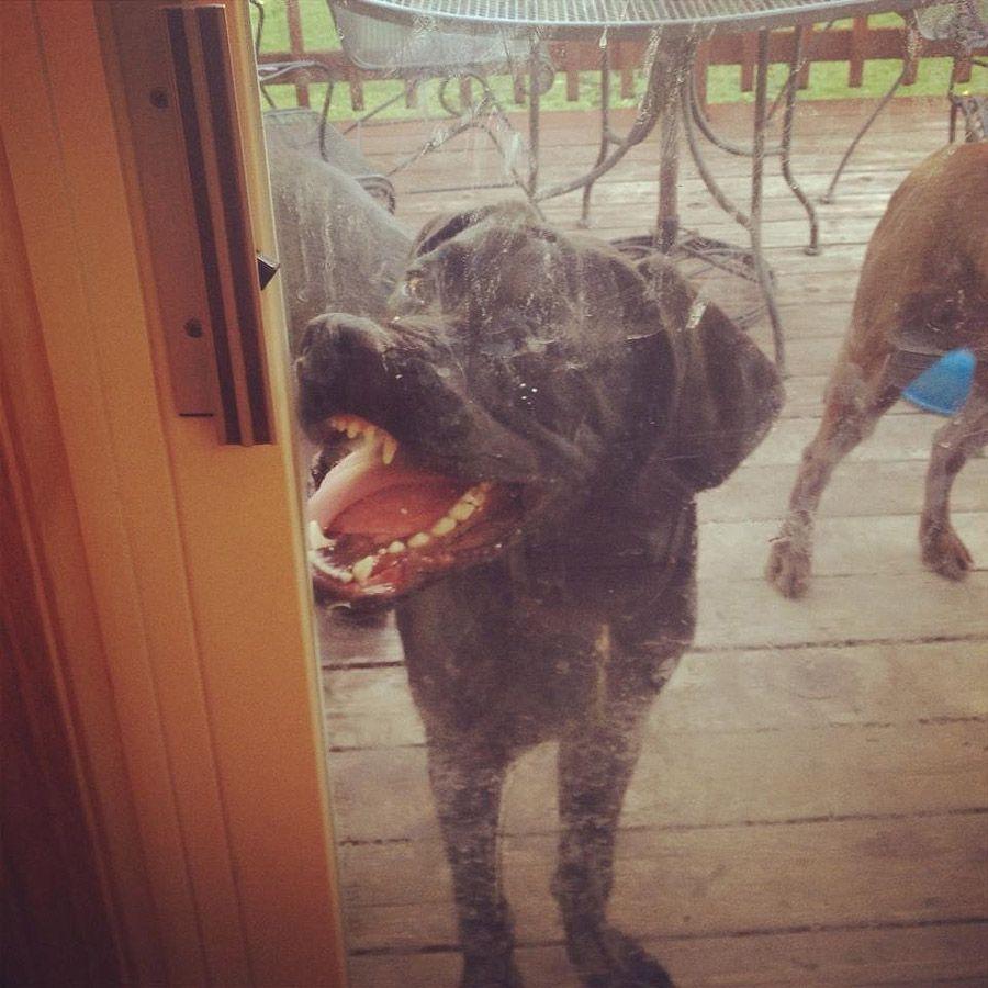 howtodog17 Собака, ты все перепутала...