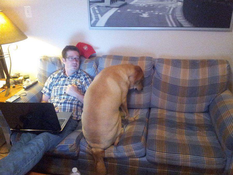 howtodog22 Собака, ты все перепутала...