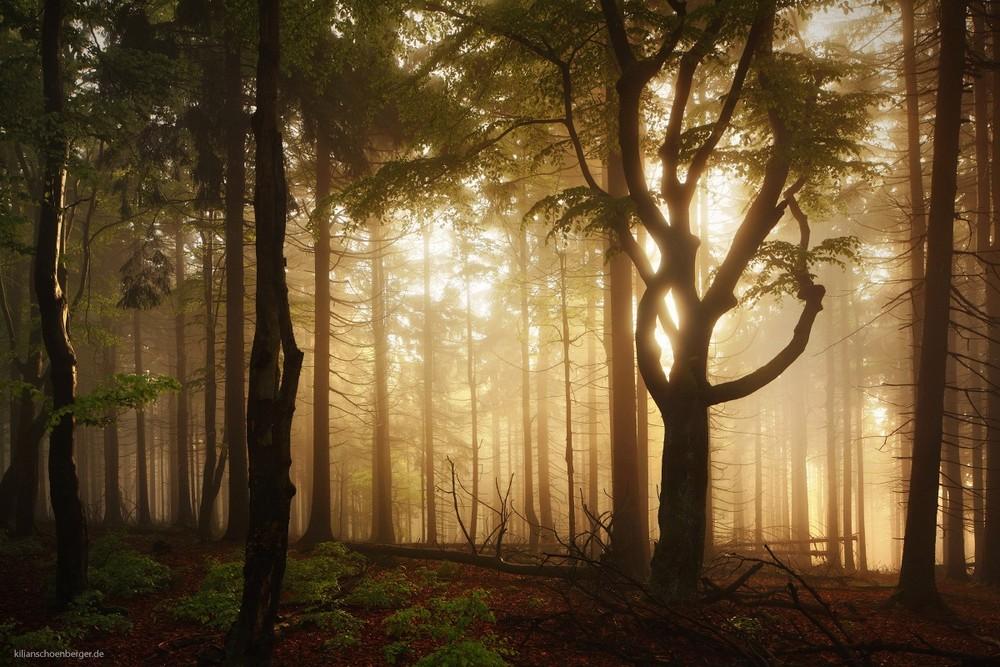 Удивительные пейзажи, вдохновленные сказками братьев Гримм Schonberger10