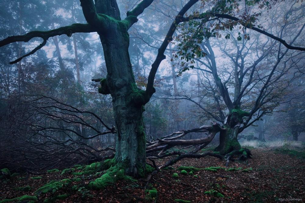 Удивительные пейзажи, вдохновленные сказками братьев Гримм Schonberger15