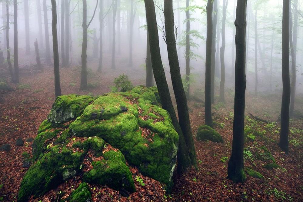 Удивительные пейзажи, вдохновленные сказками братьев Гримм Schonberger19
