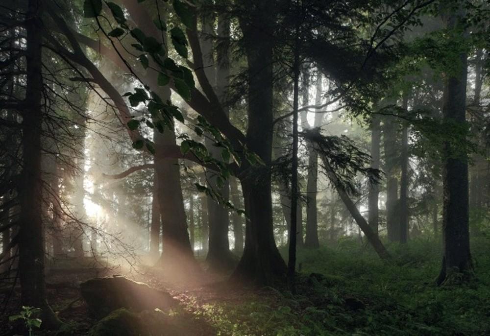 Удивительные пейзажи, вдохновленные сказками братьев Гримм Schonberger22