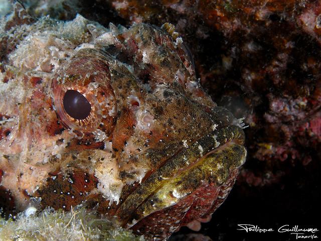 Опасные для человека рыбы Og-rib-42