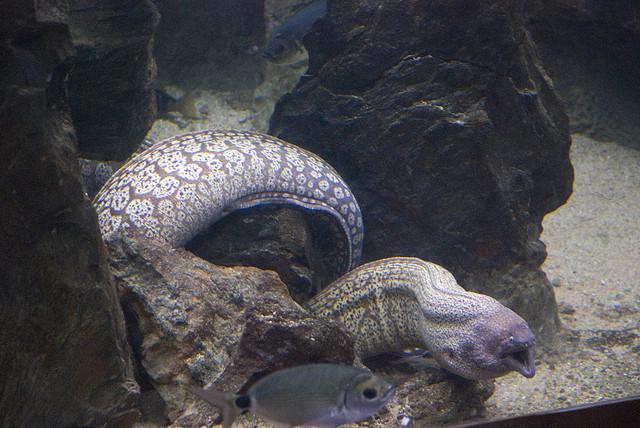 Опасные для человека рыбы Og-rib-43