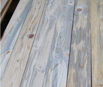 teknik mendapatkan corak kayu dengan jamur / fungi Jamur-biru