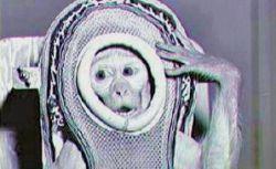 Životinjski astronauti: Stvarni pioniri svemirskih misija Img4d63615ed5c78