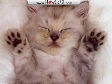 Fotografije malih i velikih mačaka - Page 15 Adorable-Cats-Screensaver