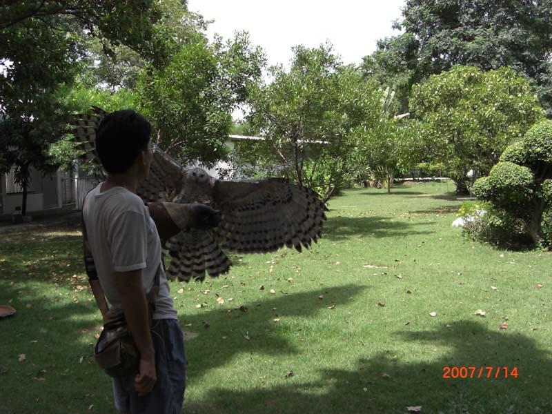 Comparação do tamanho de águias  com relação ao homem. Cimg0387_176
