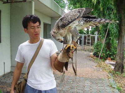 Comparação do tamanho de águias  com relação ao homem. Normal_and22797and20214_p5120021_300