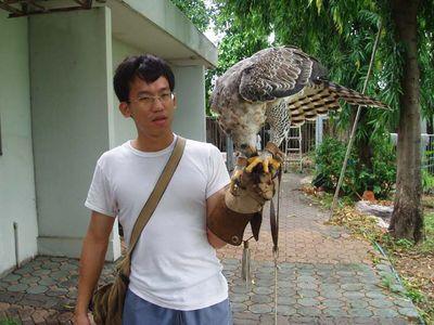 Comparação do tamanho de águias  com relação ao homem. Normal_and22797and20214_p5120024_128