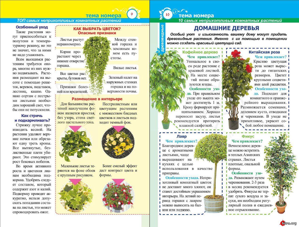 статьи о растениях из  газет и журналов - Страница 8 1528092464_730_3