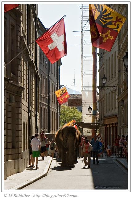سيرك Knie أكبر سيرك في سويسرا   Elephant-knie