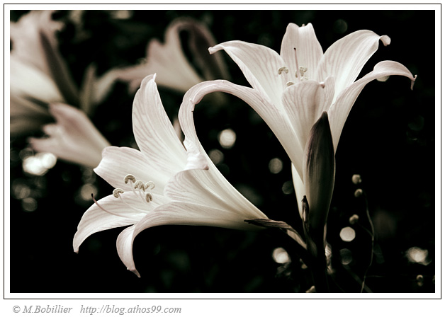 mon nathan ange etoile de ma vie Fleur-1