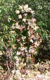 Les differents camouflage d'un sniper. Sneaky-leaf-camo-realiste