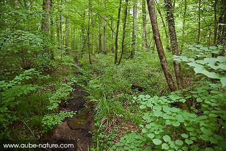 Faut-il nettoyer ce qui vient de notre nature ? Foret-sous-bois