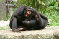 Majmuni Majmuni%20se%20ipak%20bore%20viteski.thumbnail