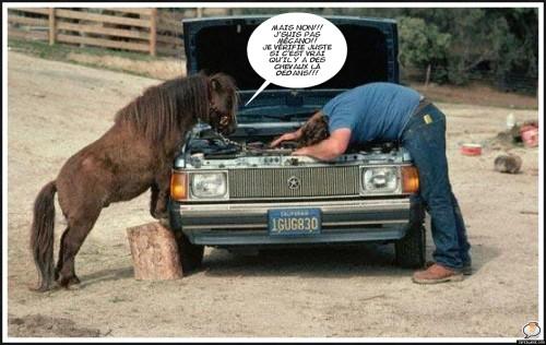 humour - Humour Spirituel (ou presque) - Page 42 Poney%20m%C3%A9cano_201101270916