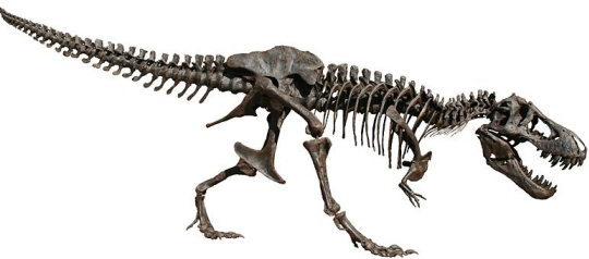Carbon-14-dated dinosaur bones, non permineralized fossils, and soft tissue like proteins are evidence for young fossils - Page 2 Trex