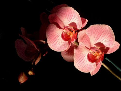 25 orchidées, succulentes, plantes épineuses, grasses 20071015a_photo_orchidee