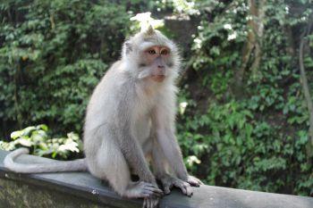 Un animal - Blucat - 4 Novembre trouvé par Martine 968509