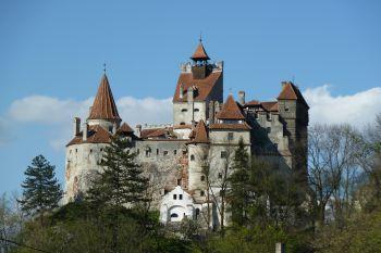 un château - ajonc - 12 juin 2016 trouvé par snoopie 820101