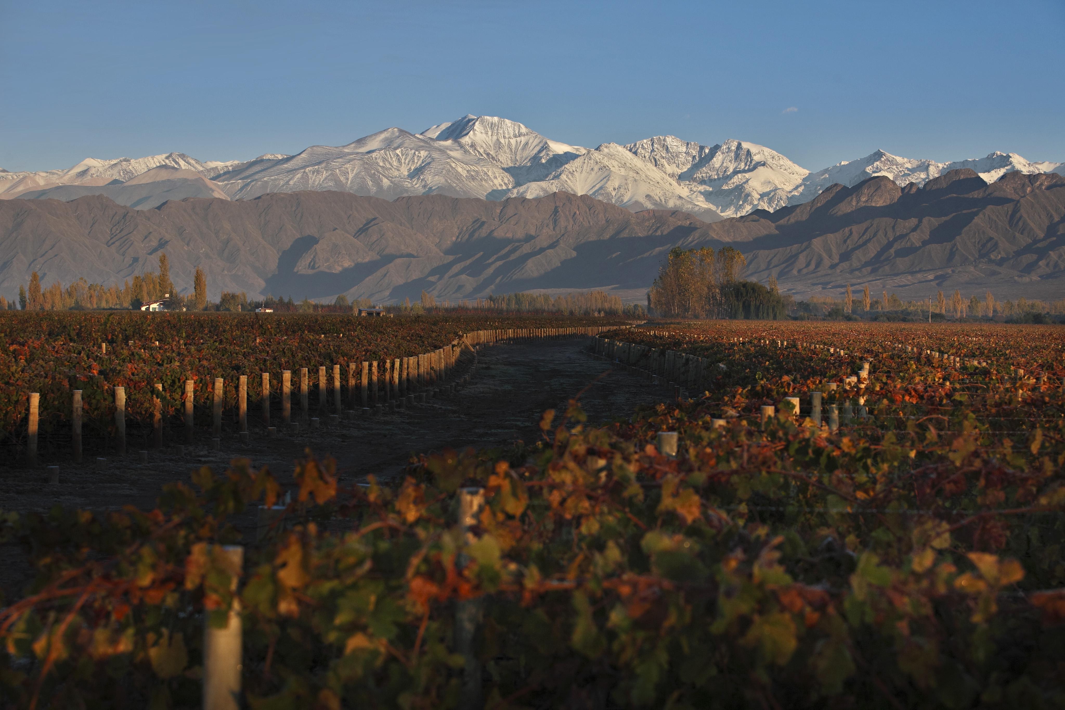 AL DESPERTAR Mendoza-vineyards