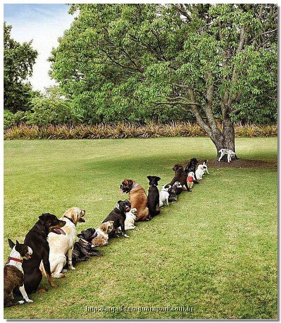 la file ! Deforestation