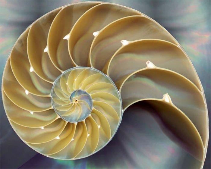 Ракушка в магии. Магия ракушек. Обряды и ритуалы с ракушками.  Fibonacci_shell