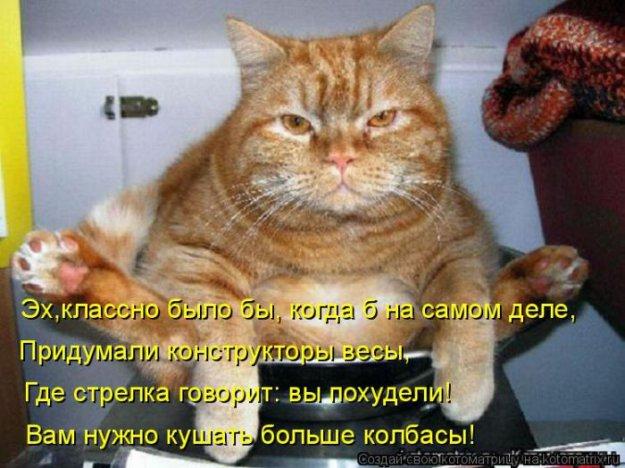 Котоматриця!)))) - Страница 9 206551_467355