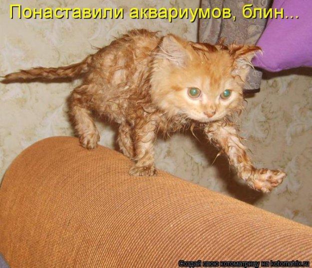 Котоматриця!)))) - Страница 9 206551_467371