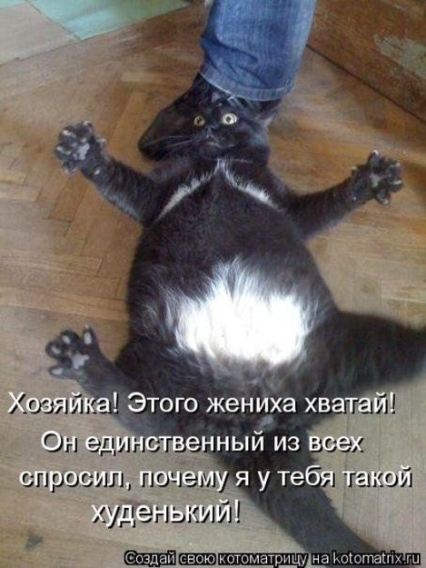 Котоматриця!)))) - Страница 10 228572_523916