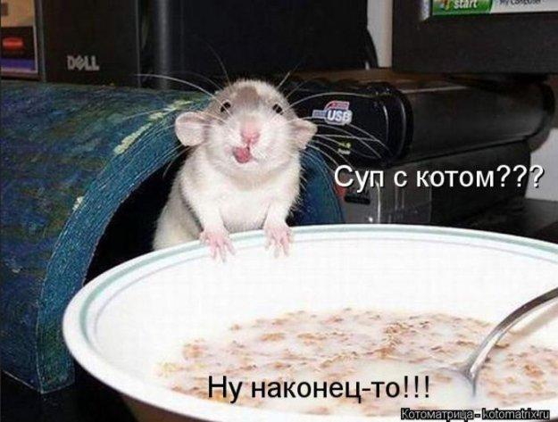 Котоматриця!)))) - Страница 10 228982