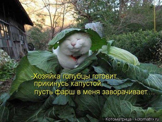 Котоматриця!)))) - Страница 10 228982_525418
