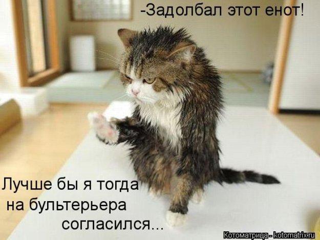 Котоматриця!)))) - Страница 10 234123_538976