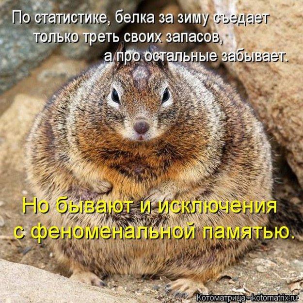 Котоматриця!)))) - Страница 10 234123_538978