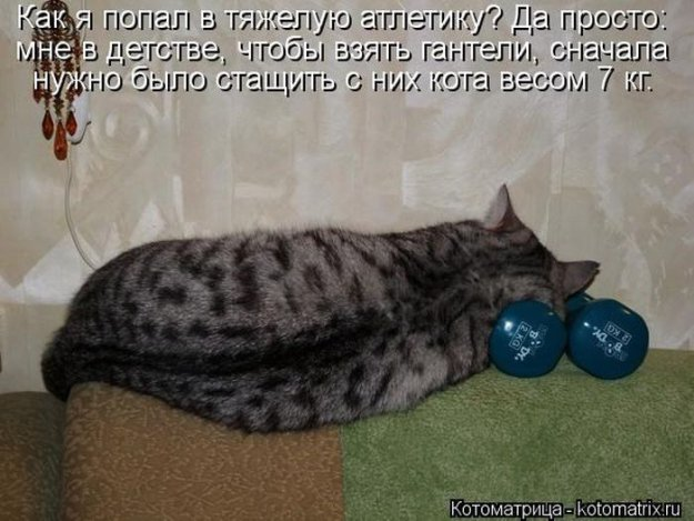 Котоматриця!)))) - Страница 10 226676_517626