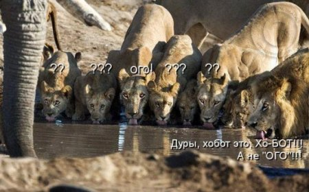 Котоматриця!)))) - Страница 9 210509_475984
