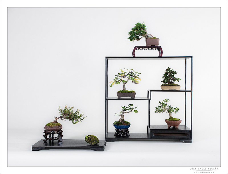 New display stands on Bontxai 03