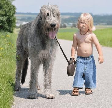 'world's saddest dog' the difficulties in Animal adoption  1-a-boy-his-irish-wolfhound