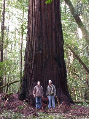 paradisi ...naturali, perchè in fondo siamo tutti ecologisti Redwood