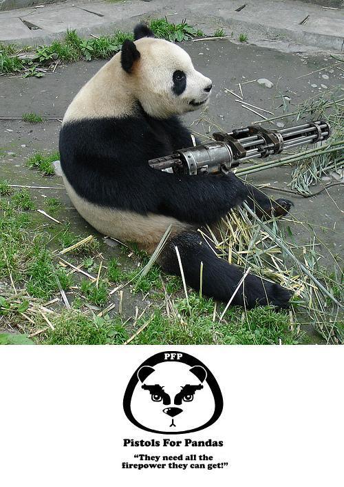 Panda plaza Pandas-need-guns1