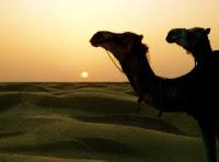 Resor till Afrika Sahara