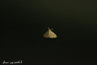 صورة حشرة  - IMG-2-003