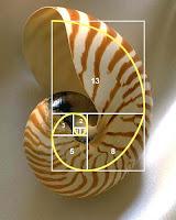 Magija broja - Zlatni presek Puz