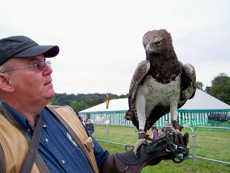 Comparação do tamanho de águias  com relação ao homem. B
