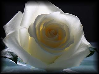 Amigo Secreto. Deja tus detalles y regalos. Parte II - Página 2 Rosa%2Bblanca